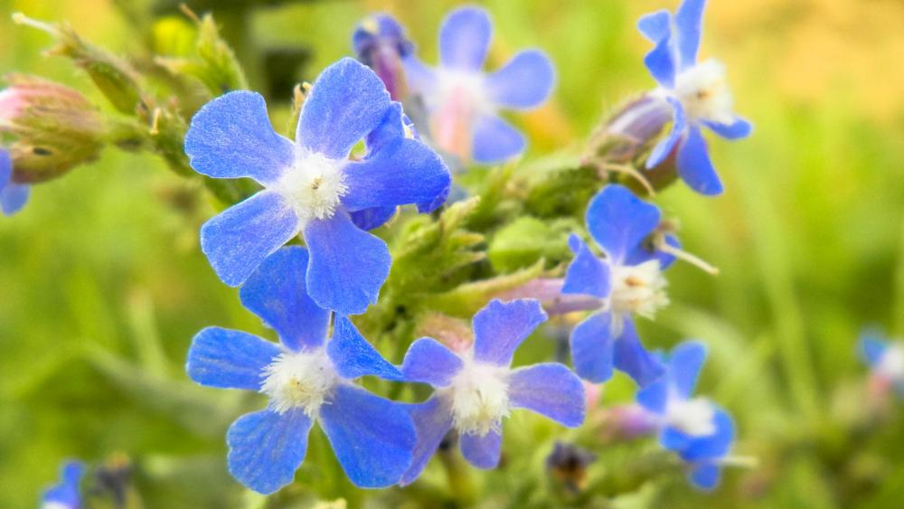 Photo in Nature #blue #flower #nature #flowers