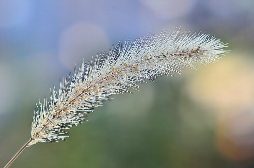 Photo in Nature #grass #nature #close up