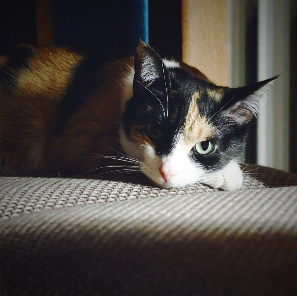 Photo in Portrait #cat #kitten #portraitphotography #portrait
