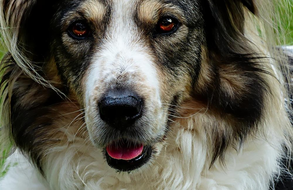 Photo in Animal #pet #dog #pepper