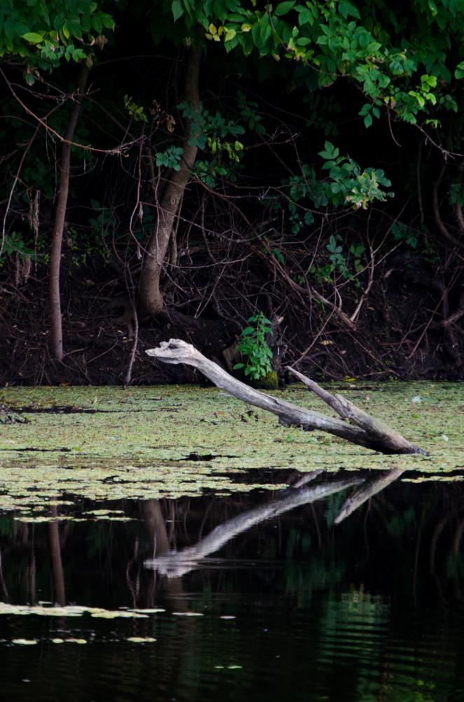 Photo in Random #lake #monster #snake #waterscape
