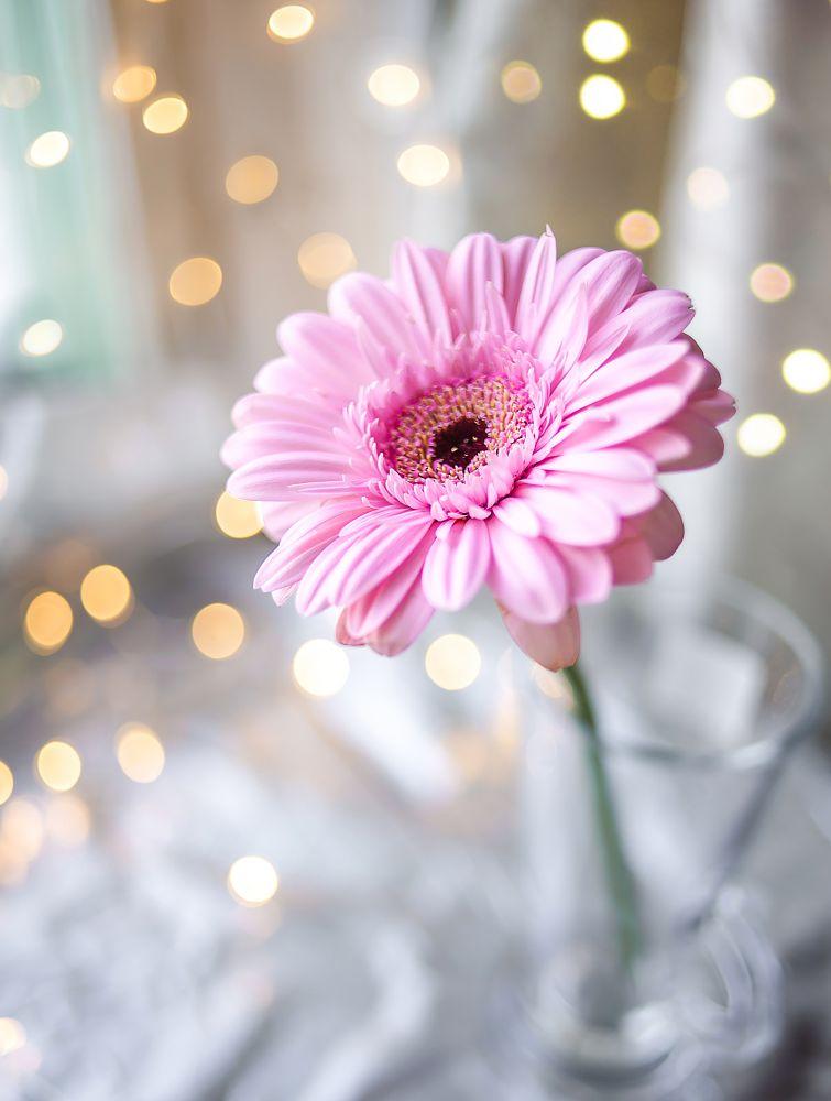 Photo in Still Life #love #pink