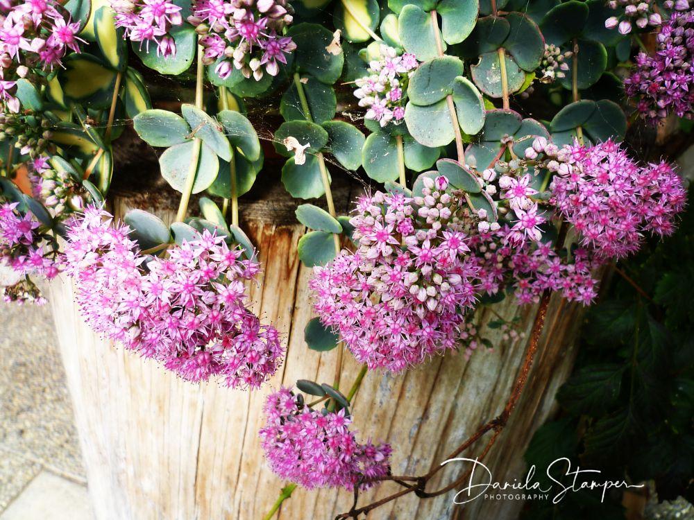 Photo in Nature #flower #nature #violet #blumen #garden #country #plant
