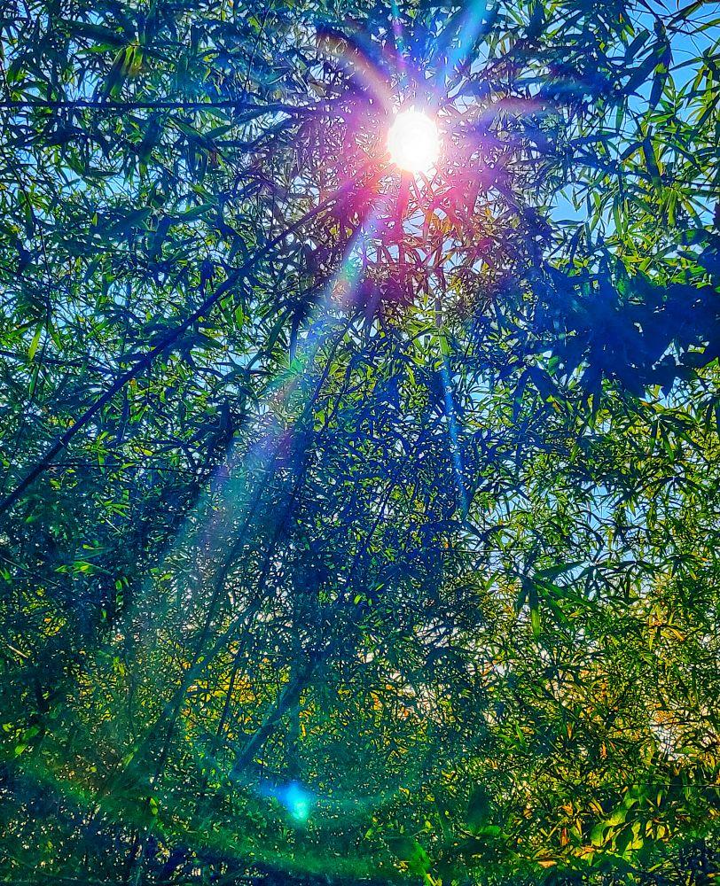 Photo in Nature #natgeoindia #lonelyplanetindia #natgeoyourshotindia #oneplus6tphotography