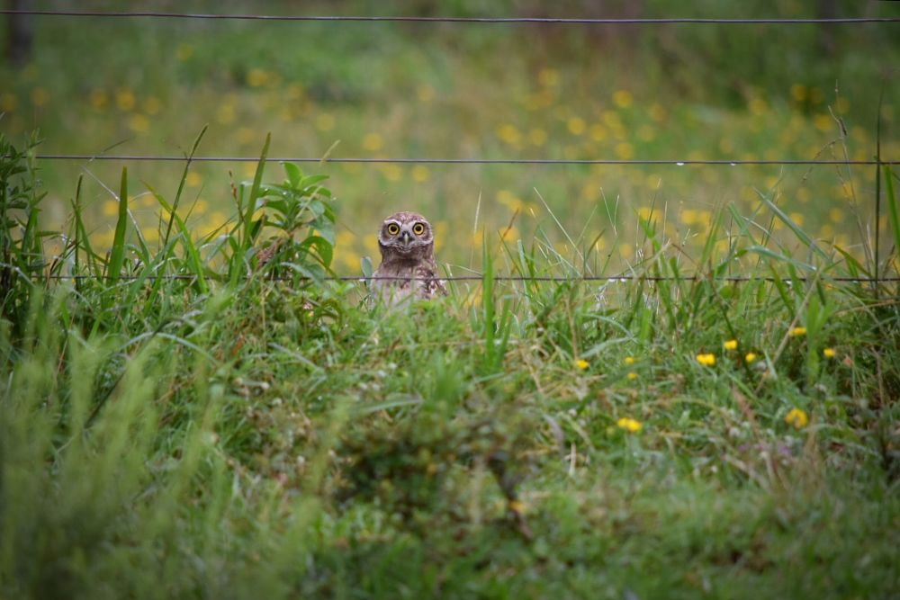 Photo in Animal #owl #nature