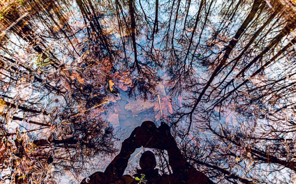 Photo in Nature #forest #water #puddle #trees #nature #leaves #canon #canonru #natgeo #natgeoru #nationalgeographic #sergeymaksimov #abstract