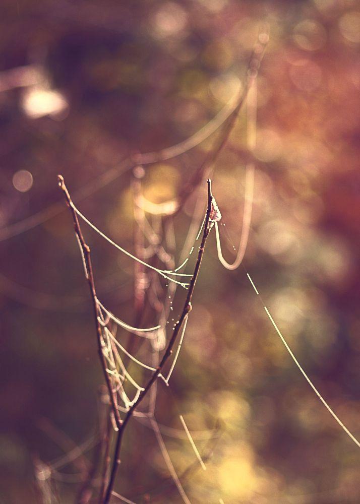 Photo in Nature #nature #autumn #web #colors