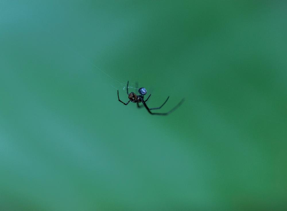 Photo in Animal #green #spider #macro