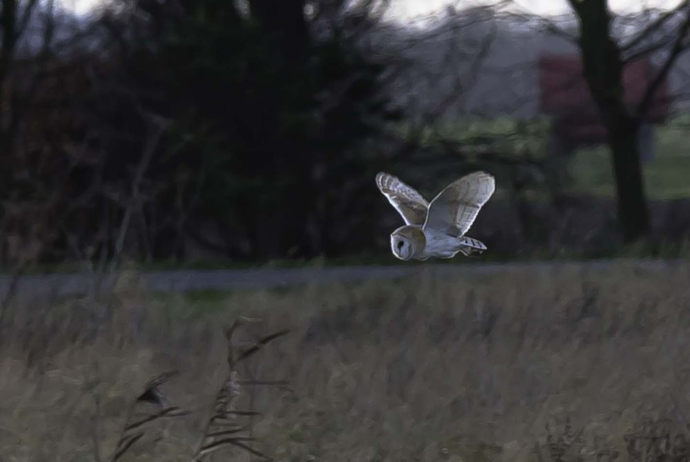 Photo in Nature #birds #owl #nature