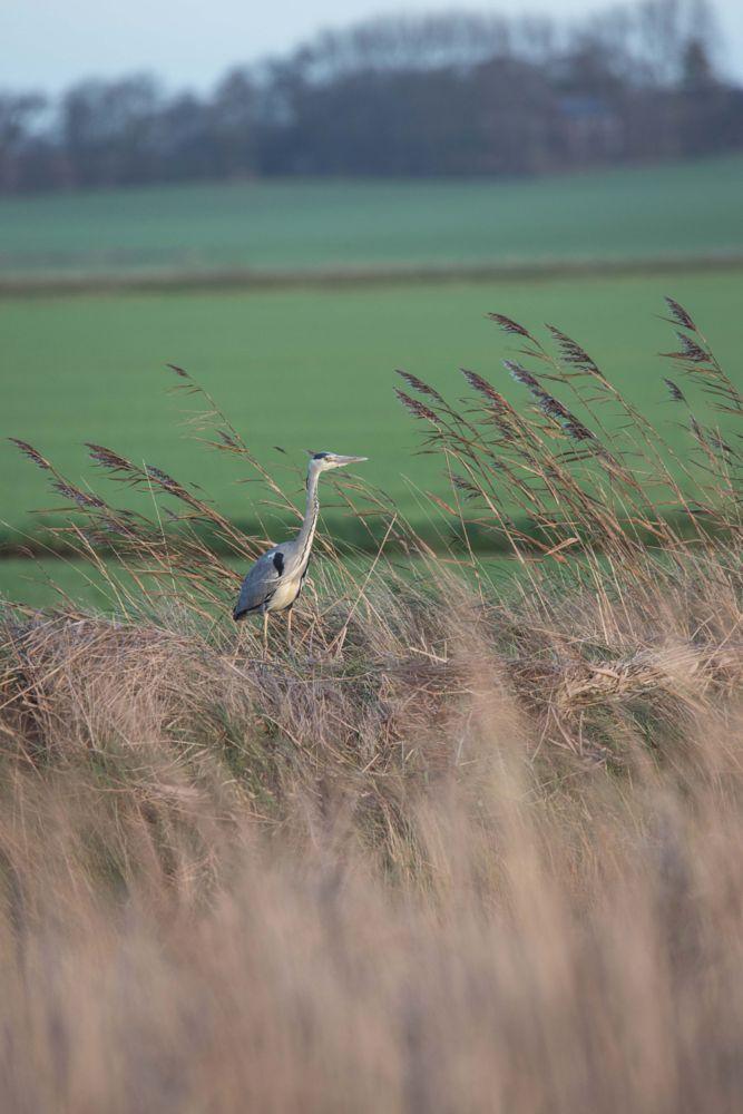 Photo in Nature #bird #nature #wildlife