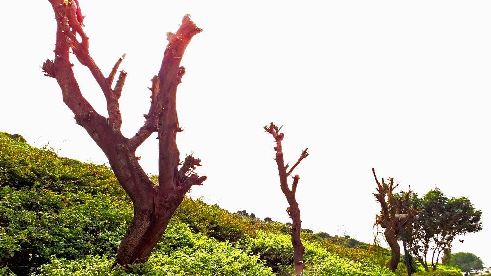 Photo in Random #tree #flower #sky #new #viwe #garden .. see .. plants forest