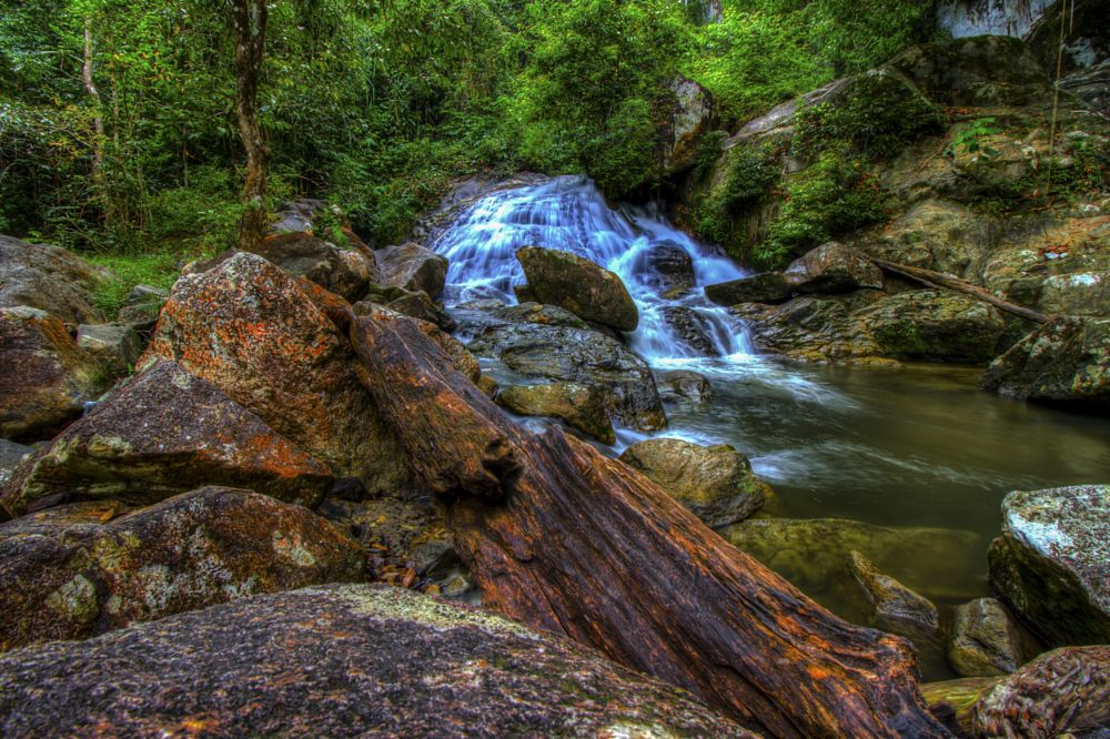 Photo in Nature #waterfalls #nature #water #forrest