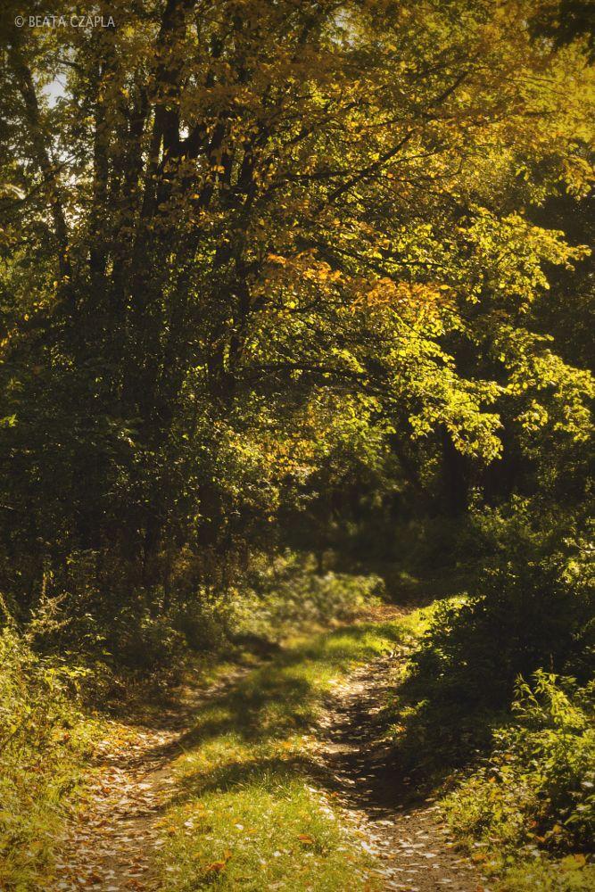 Photo in Nature #autumn #orange #beautiful #poland