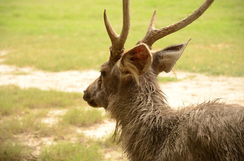 Photo in Animal #apex hina #animal #zoo #ludhiana #deer #wilderness