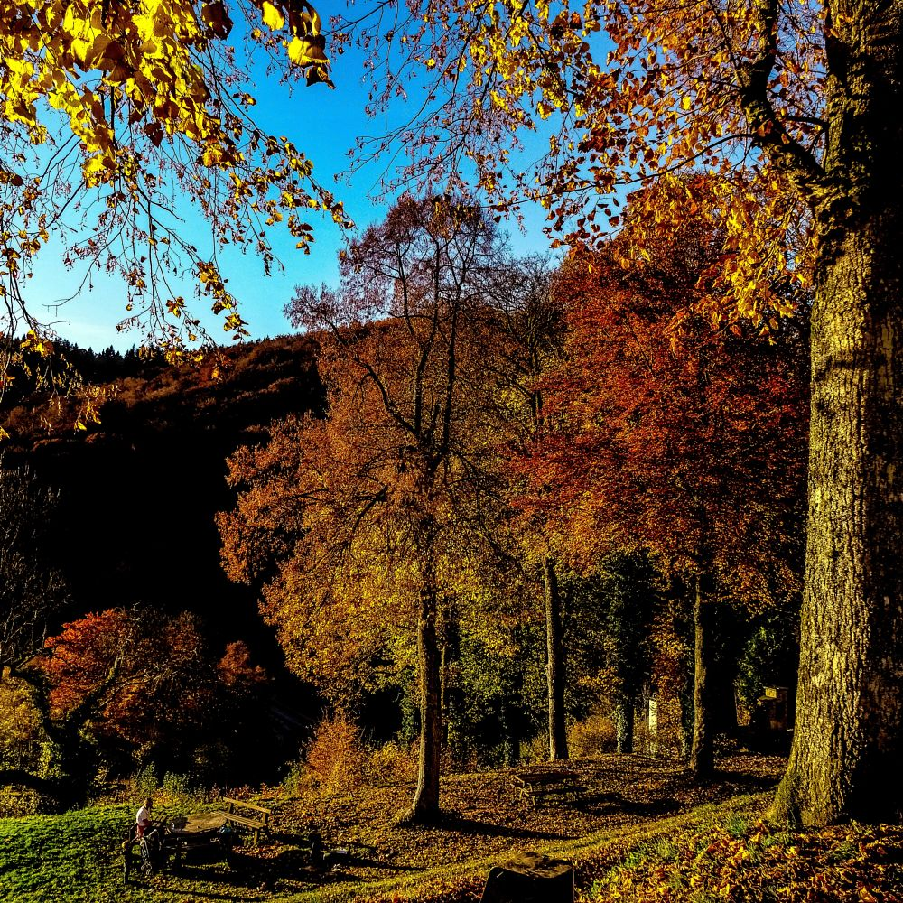 Photo in Landscape #belgium adrenes autumn boui