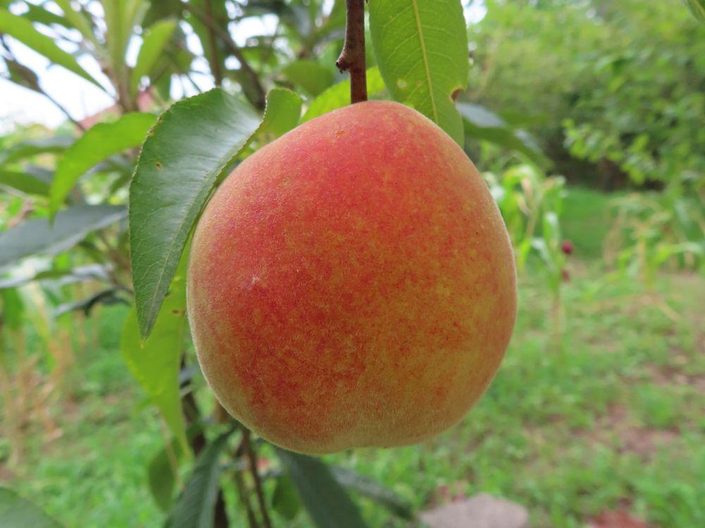 Photo in Random #peach