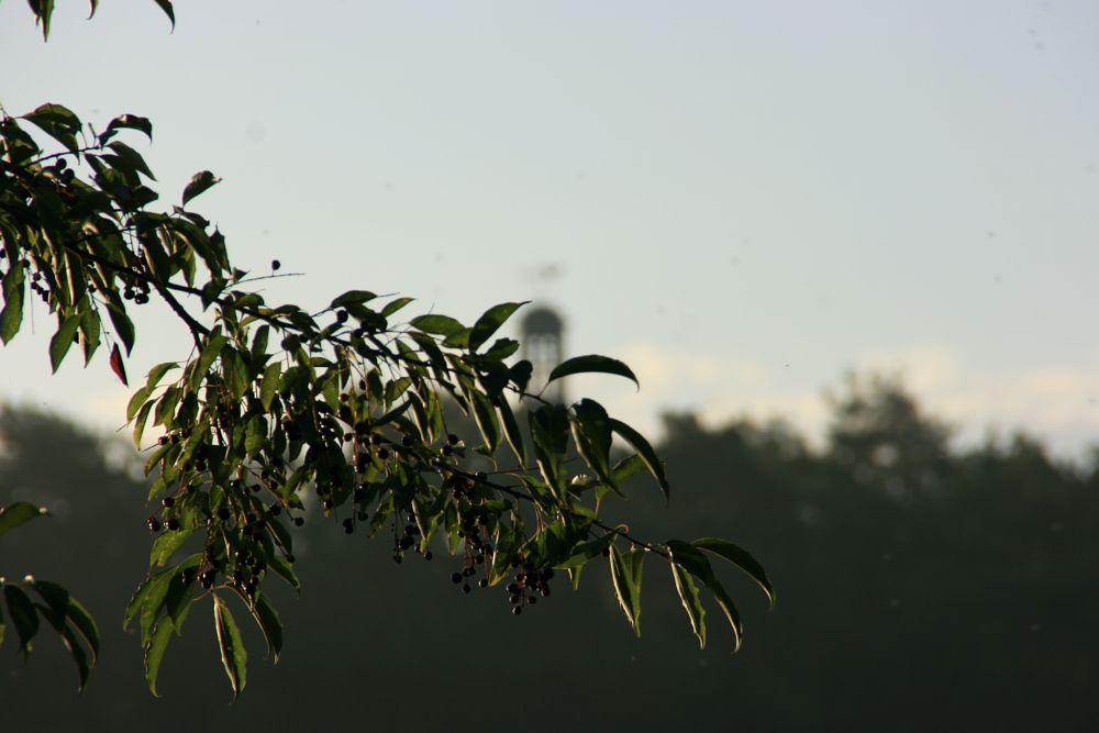 Photo in Nature #nature #naturephotography #landscape #photography #light