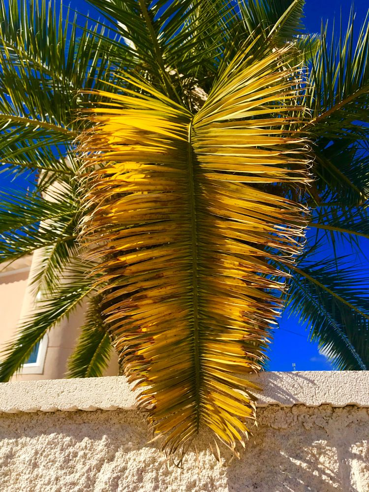 Photo in Nature #palmtree #palms #leaf