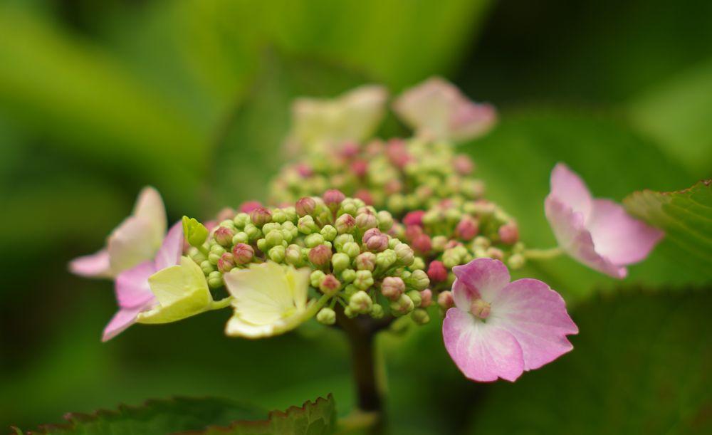 Photo in Nature #blooming #botanical #flower #botany #spring #garden #flower head #color #flora #flowers #pentax