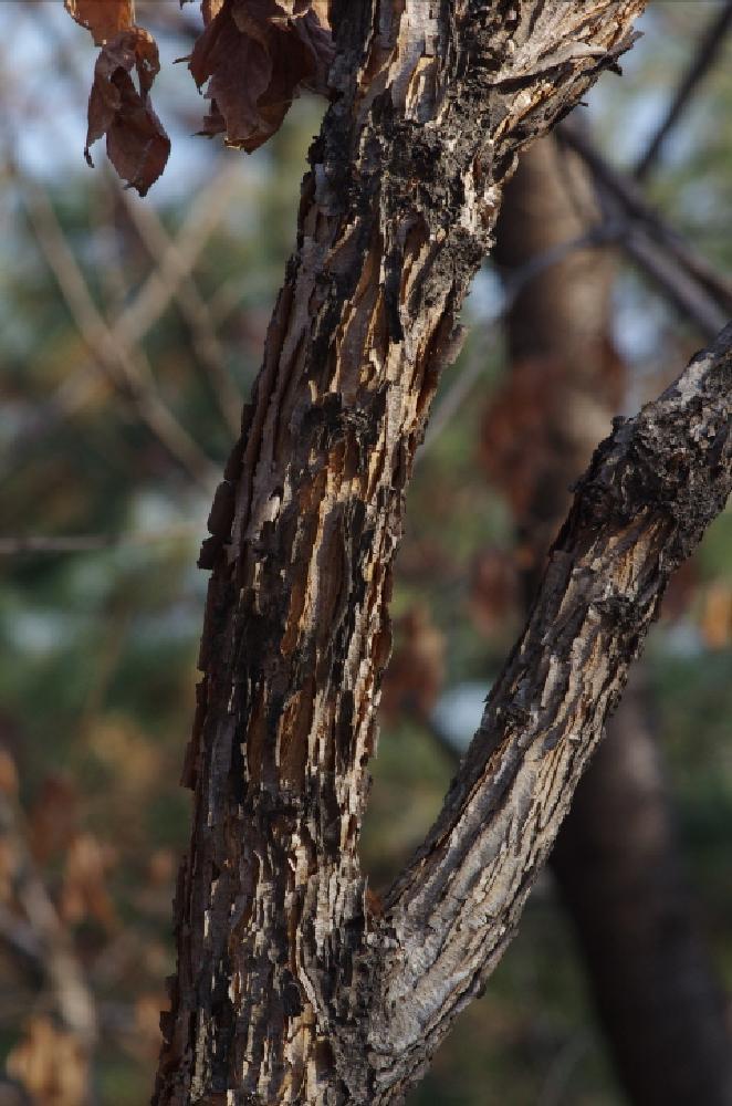 Photo in Nature #life scene #february #seoul #life #scene #tree