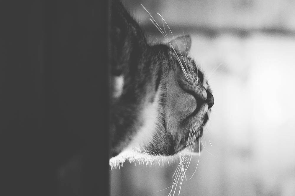 Photo in Animal #cat #black and white #cute