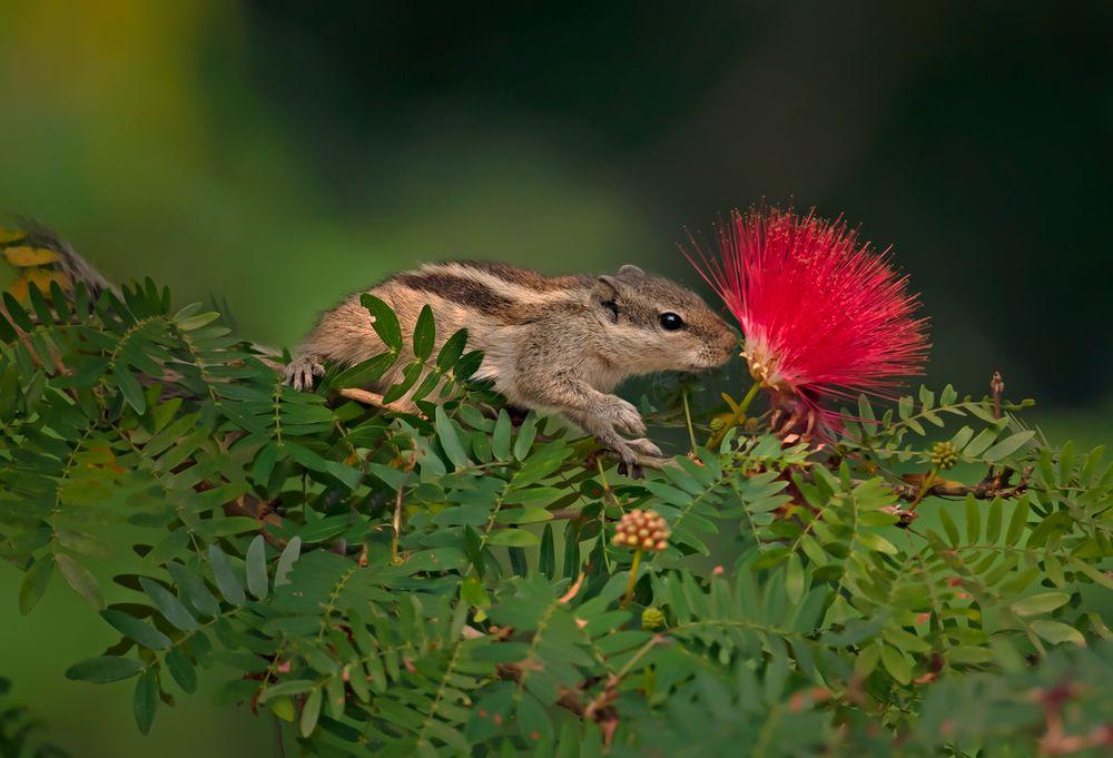 Photo in Nature #wildlife & nature.flower.close #squirrels