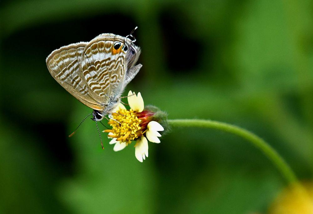 Photo in Nature #wildlife and natureclose up #wildlife and natureclose up