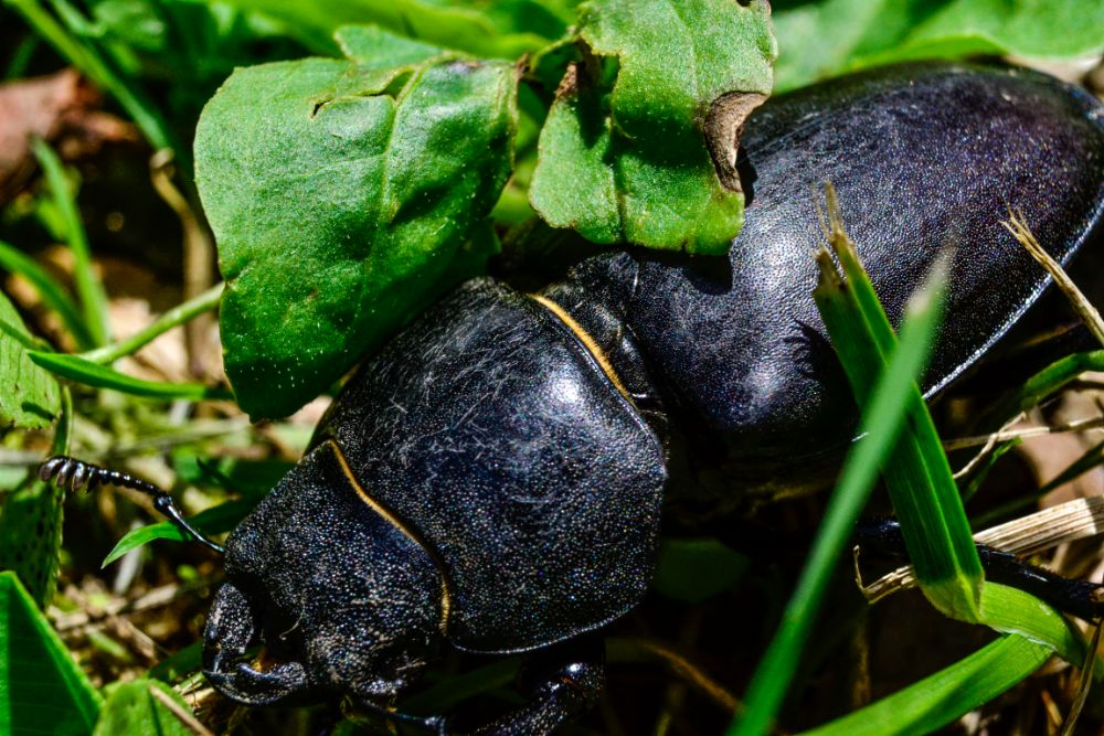 Photo in Animal #black #big #bug #animal