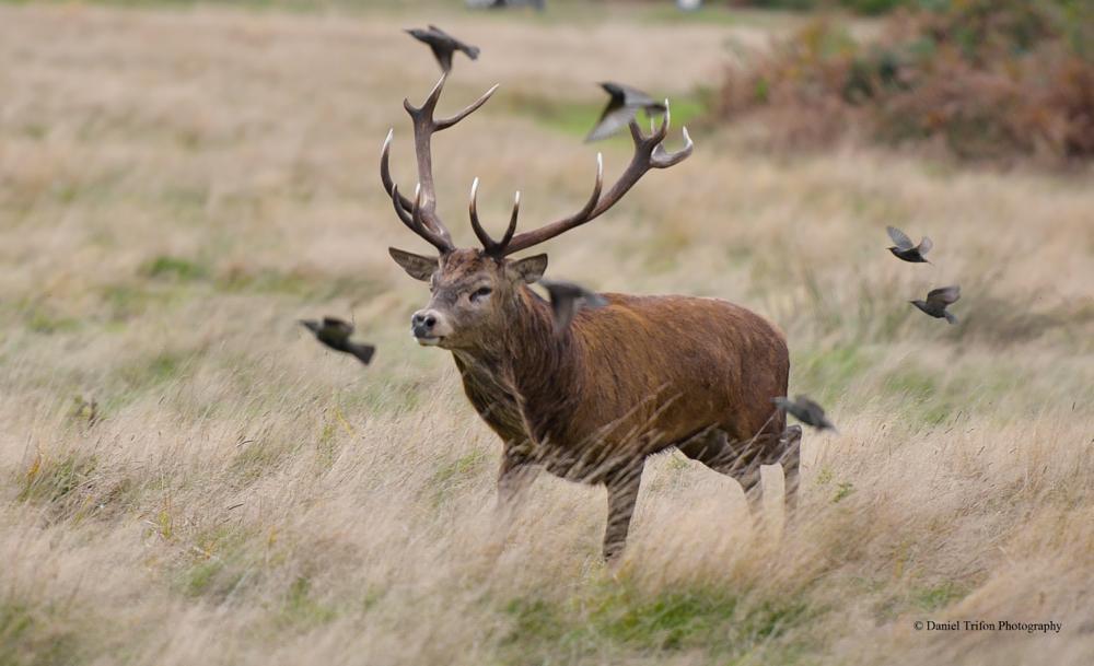 Photo in Animal #deer #rut #animal