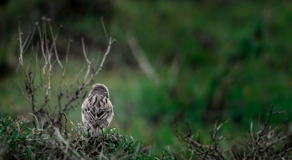 Photo in Nature #photography #bird #portrait #animal #wild #random #nature