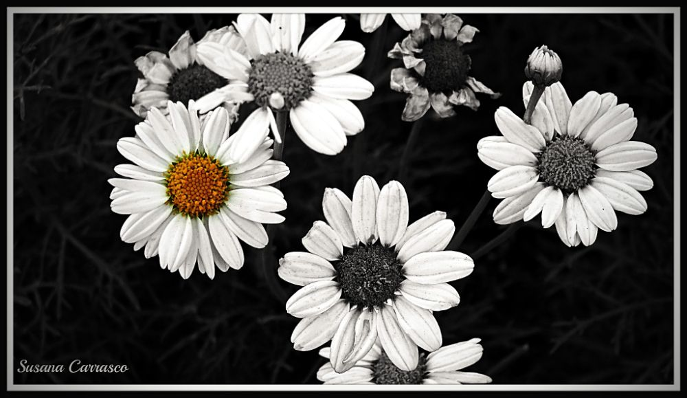 Photo in Random #flor #flower #nature