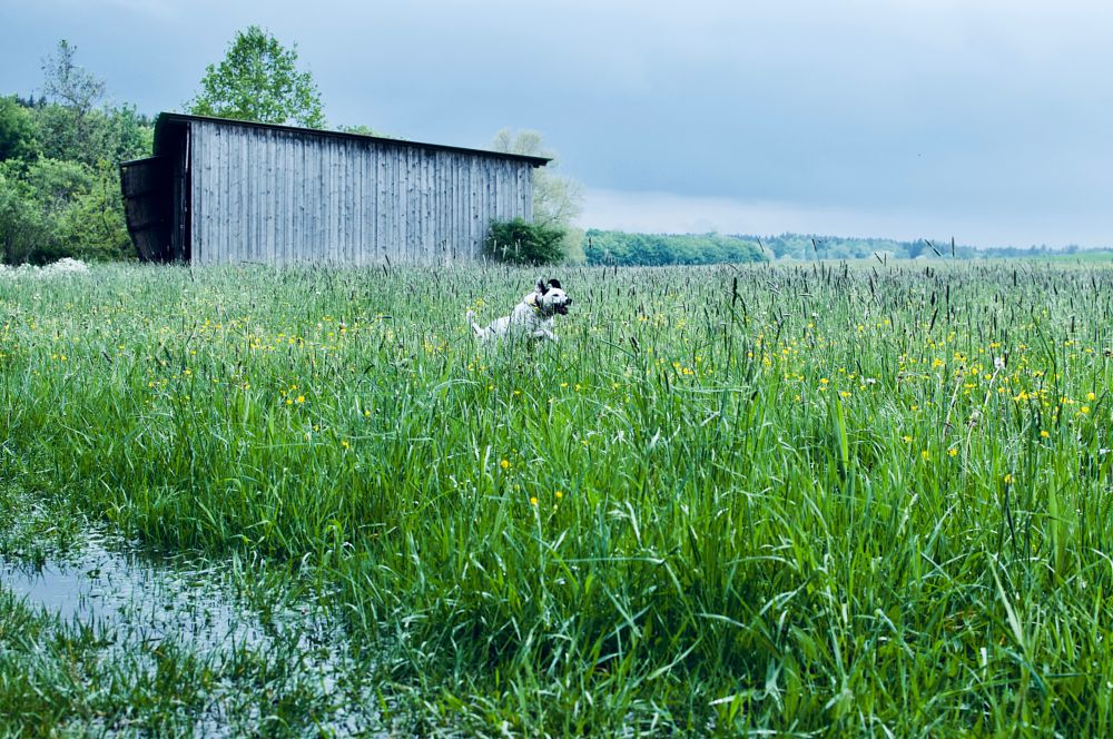 Photo in Animal #dogs #photo #nature #cloudy days #rain #water #landscape #summer moments