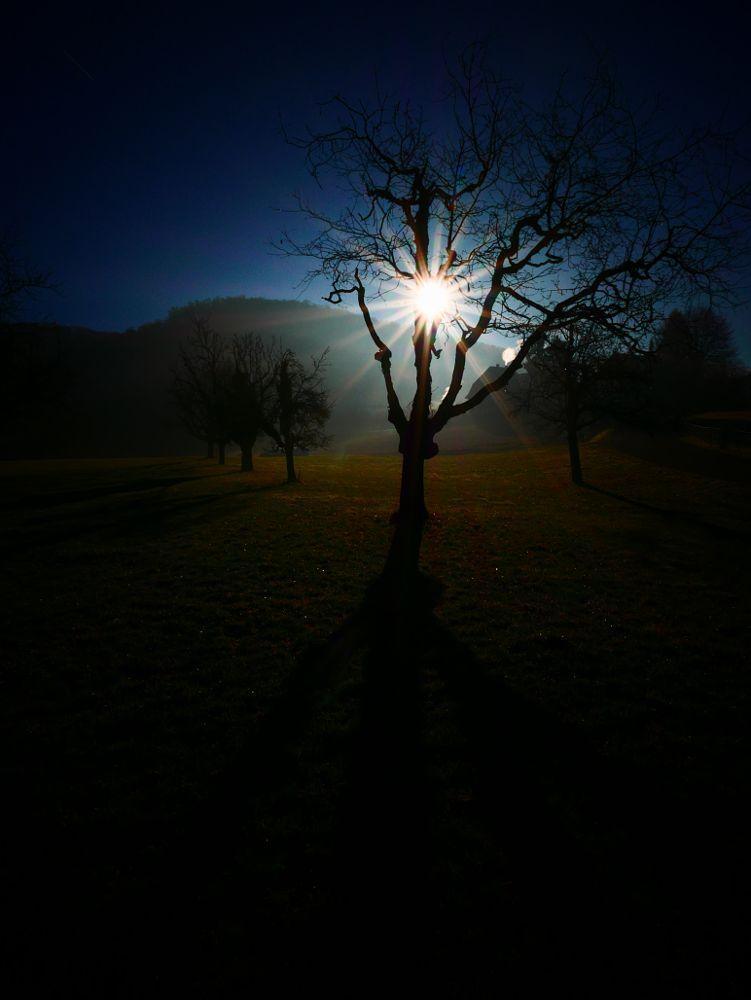 Photo in Nature #nature #light #sun #landscape