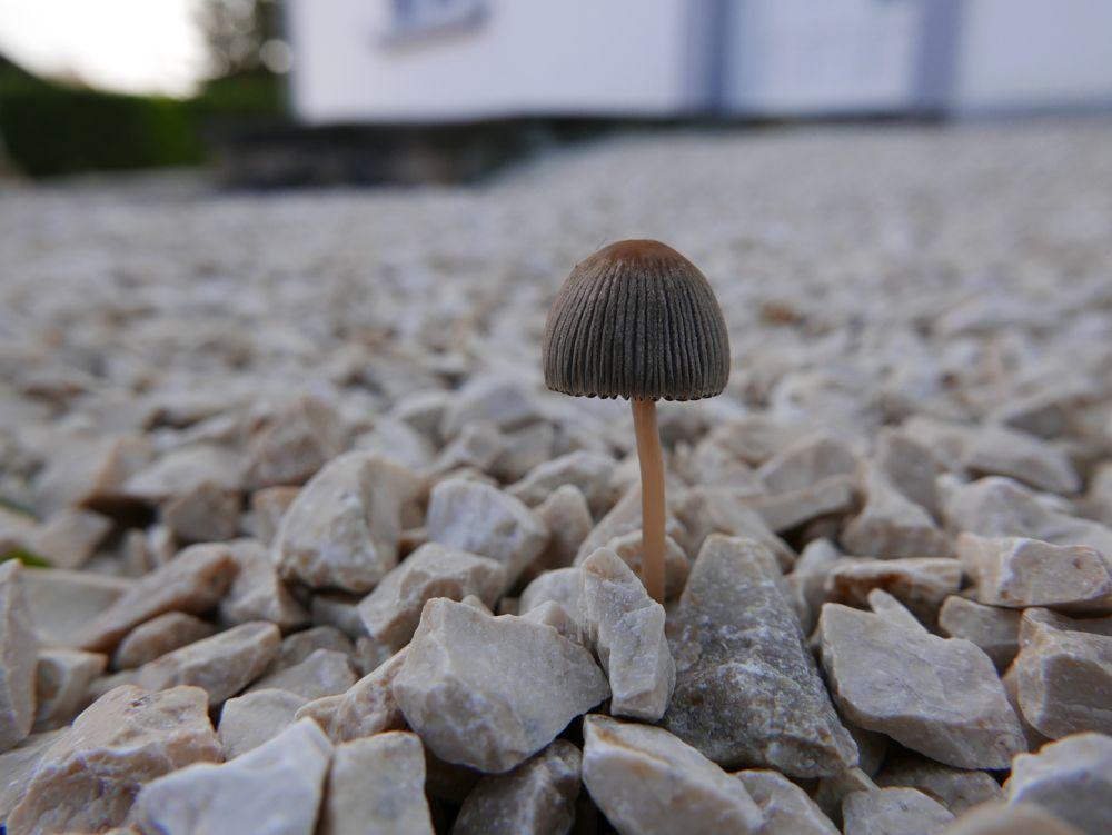 Photo in Nature #macro #nature #pilz