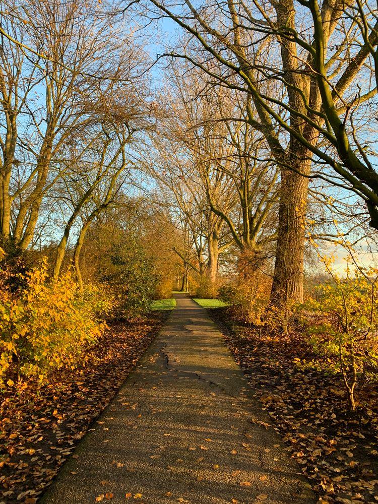 Photo in Random #monday #morning #walk #light #tree