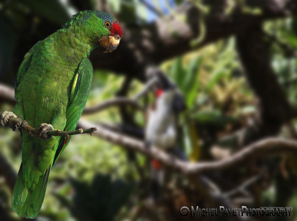 Photo in Animal #birds #animals #green #nature #eyes #wildlife #photographer #wildlife photography