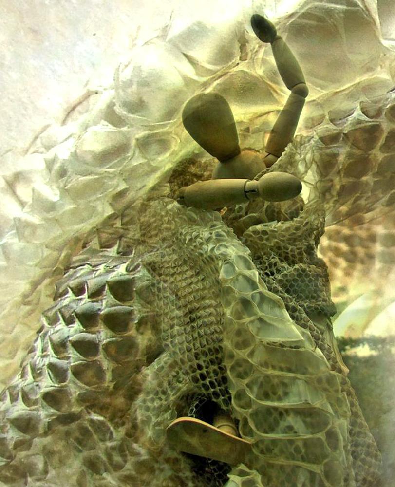 Photo in Still Life #boa constrictor's skin #fun #wooden model