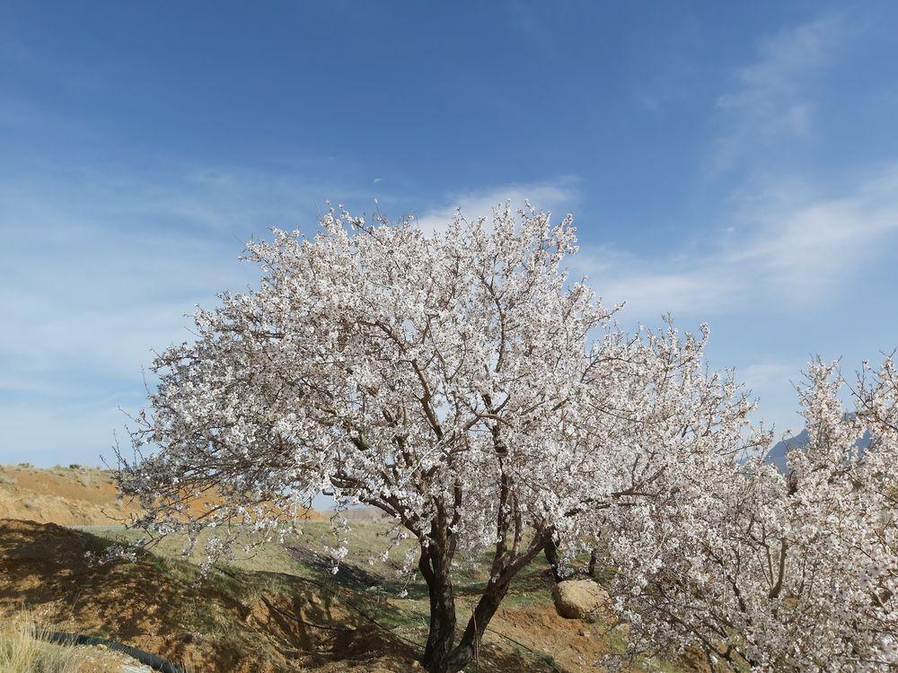 Photo in Nature #blossom #nature #landscape #spring