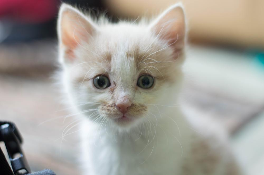 Photo in Animal #kitten #cat #young #pet