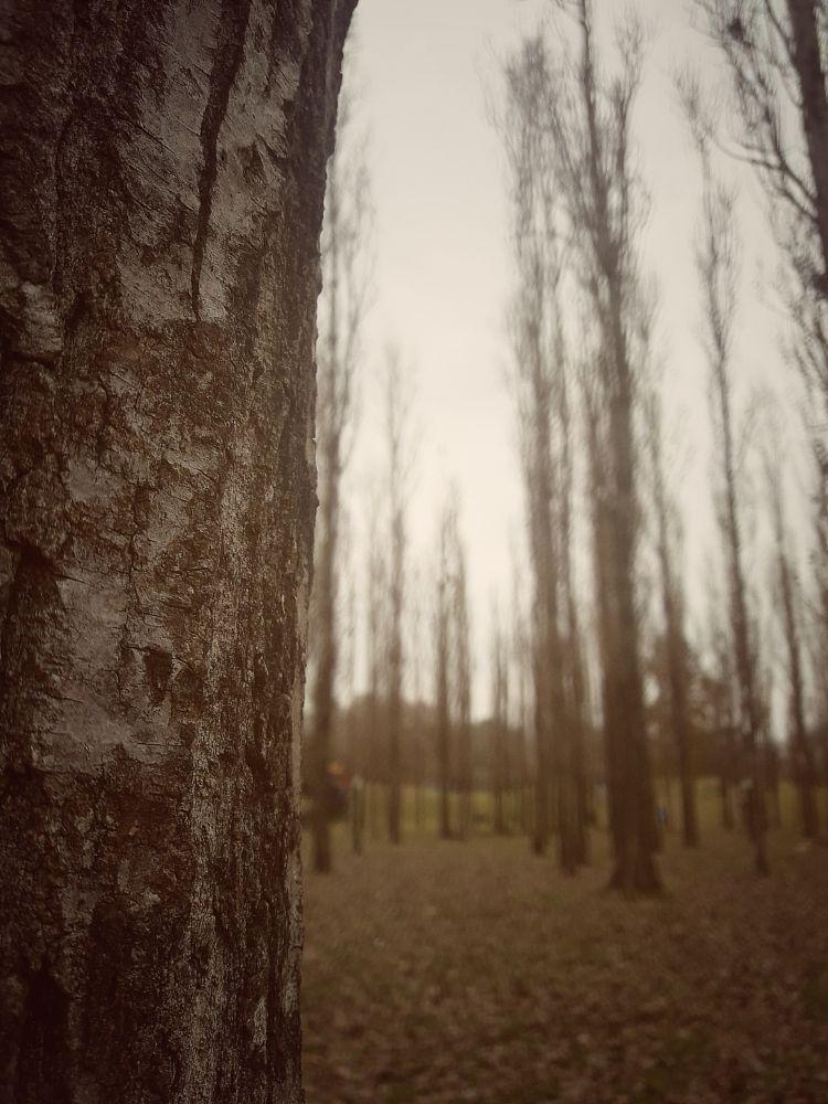 Photo in Random #photography #art #artist #landscape