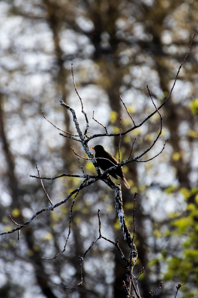 Photo in Animal #bird #forest #sweden #forestlife