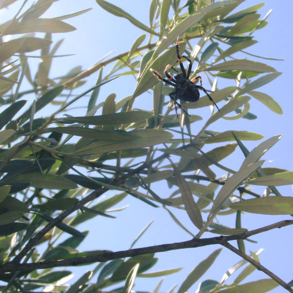 Photo in Nature #spider #nature #greece #mobile