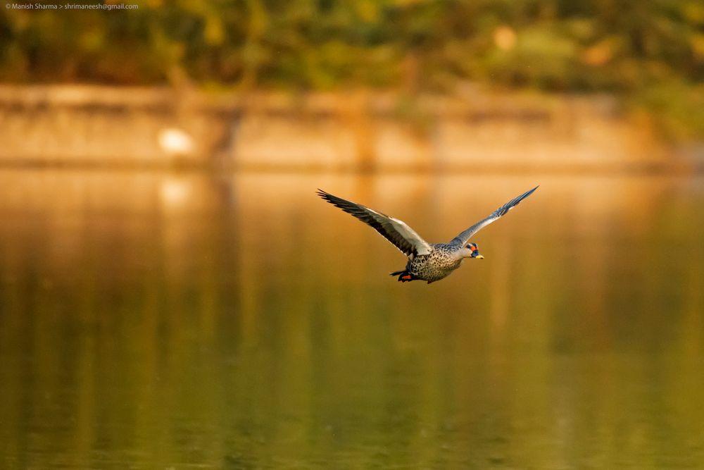 Photo in Random #birds #nature #animal #wildlife #random #travel #feathers