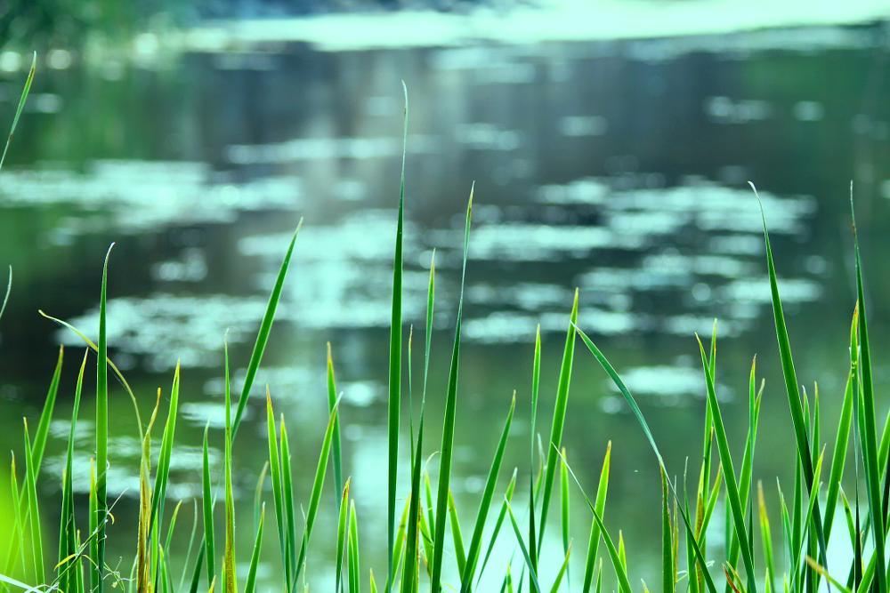 Photo in Nature #greengrasslake