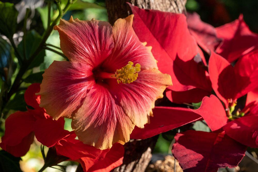 Photo in Random #flower #nature #red #macro #philippines #fujifilm #plant #petals