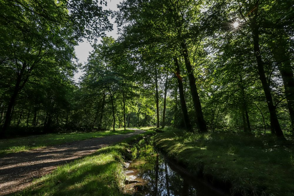 Photo in Landscape #park #landscape #nature #landscapephotography #schönbusch #germany #bavaria #water #green #forest #beautiful #summer #walk #canon #eos 6d mark ii #garden #landscape park