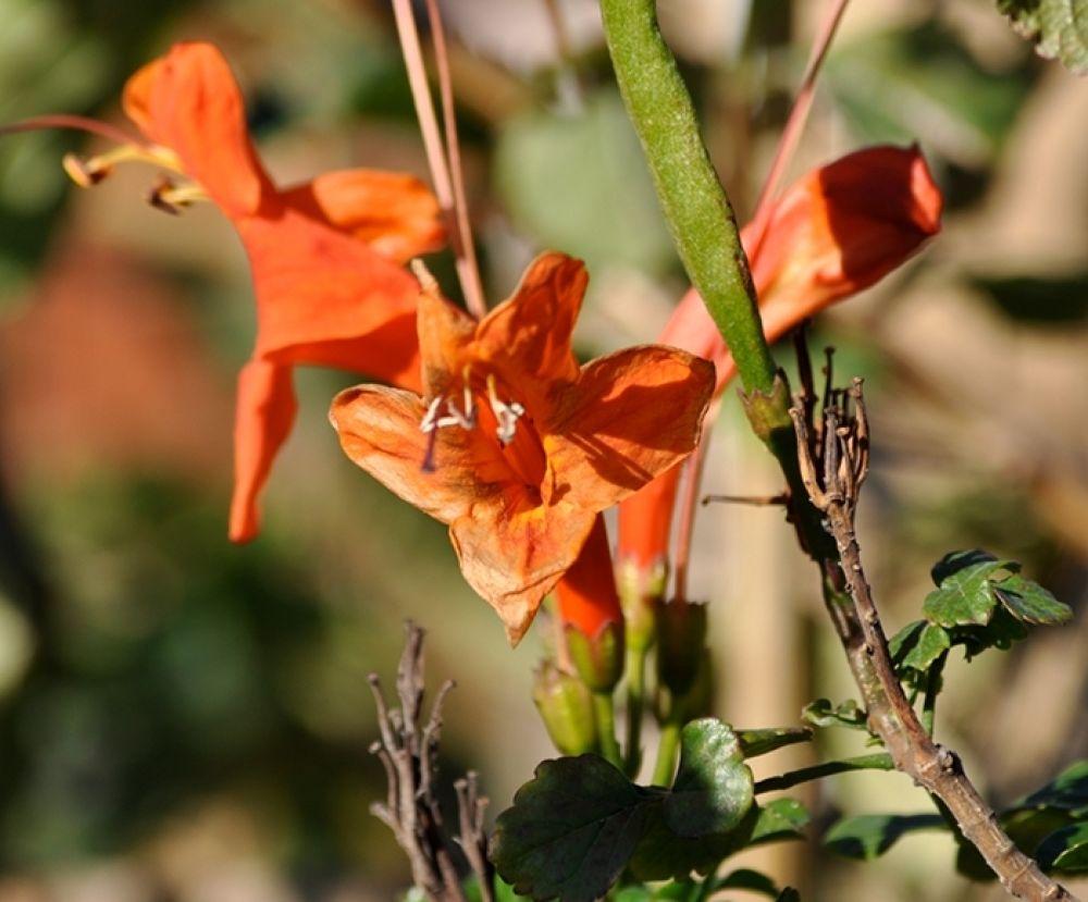 Photo in Random #blomma #north cyprus