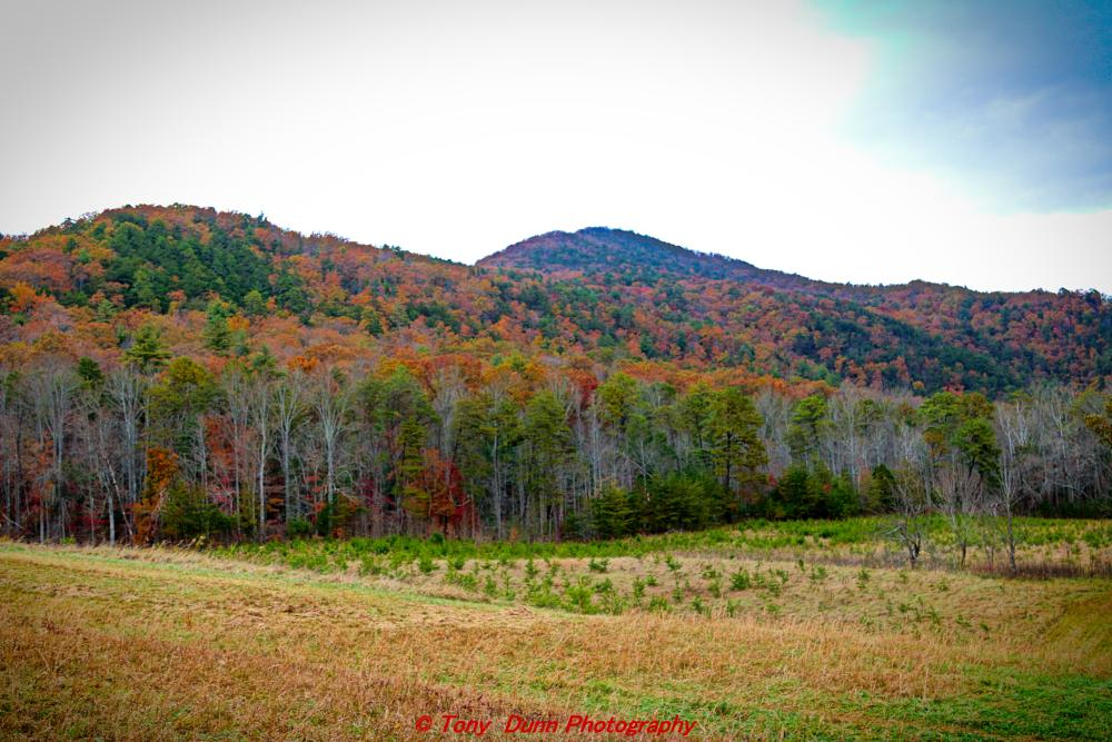Photo in Nature #mountains #outdoors #fall colors