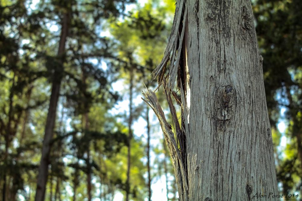 Photo in Nature #tree #broken #forest