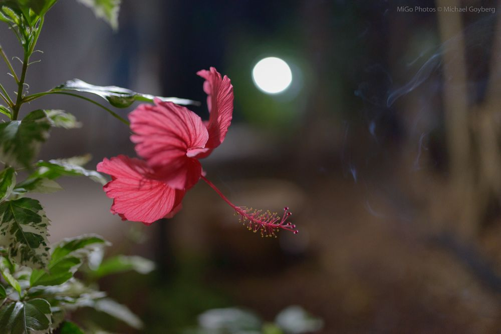 Photo in Nature #plant #flowers #bloom #night #red #light